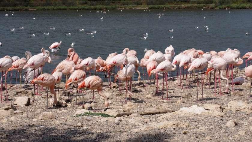 5 Parques para ver animales
