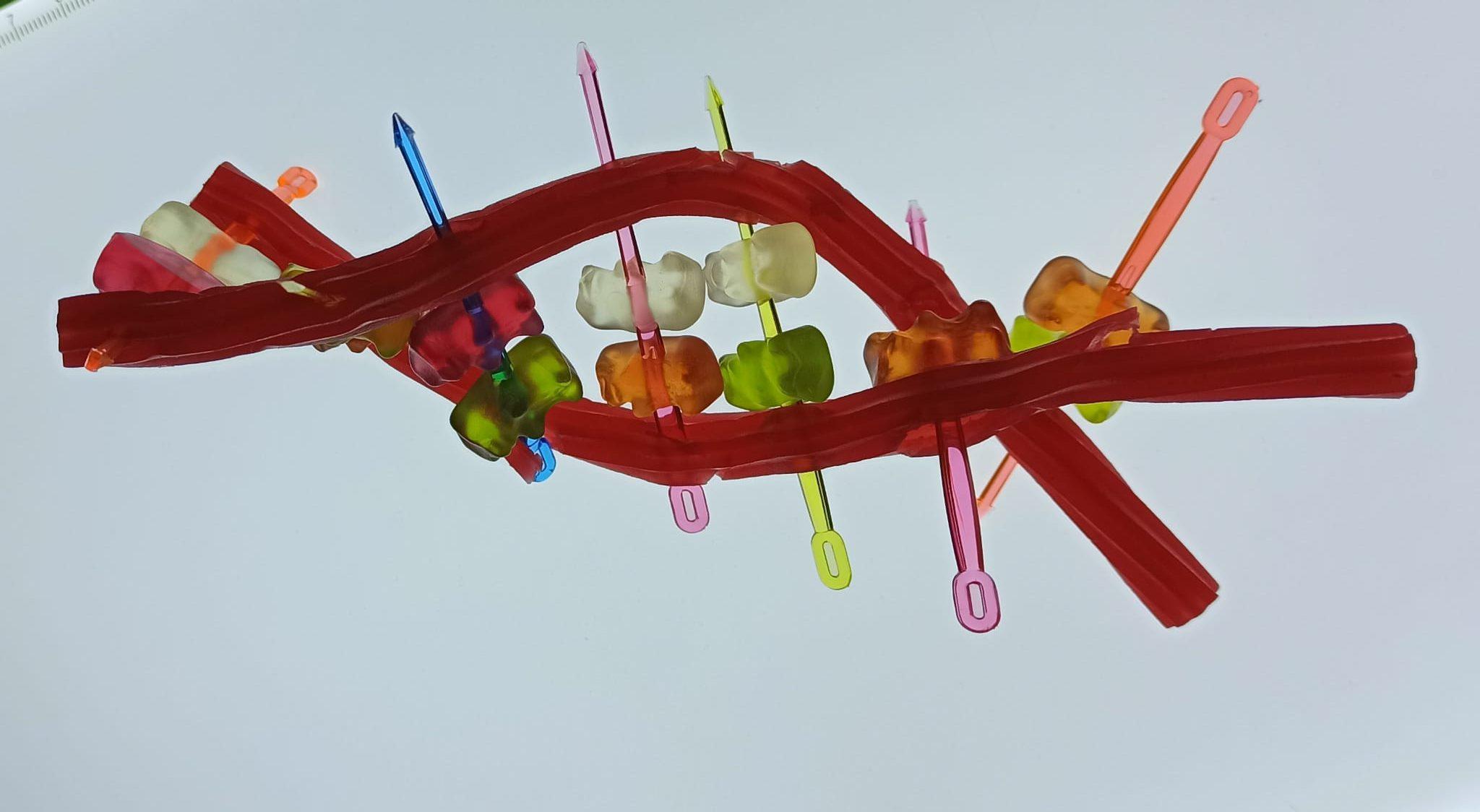Cómo explicar a los niños el ADN
