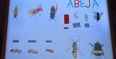Proyectos en familia: las abejas