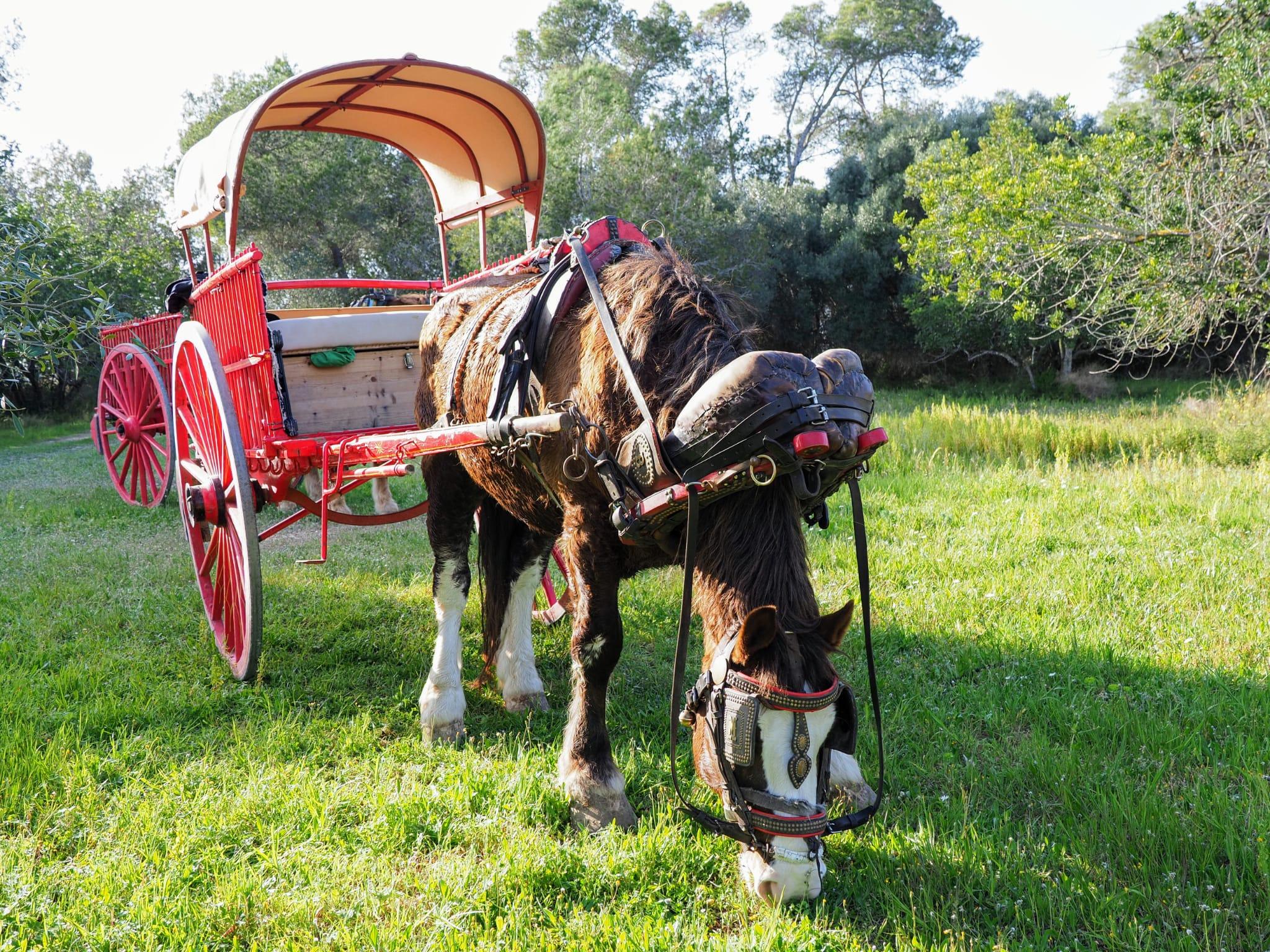 Una aventura en carro y caballo en Nulles